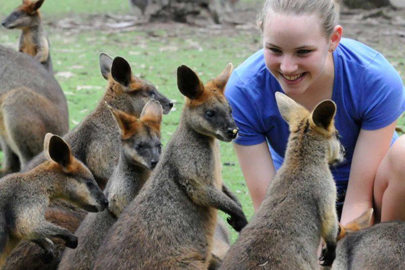 Billabong-Zoo-Croc-NSW-1